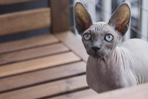 Unrelated goblin kitty image from pexels.com to make this post look nicer in social media shares.
