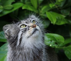 Unrelated image from pexels.com to make this post look nicer in social media shares and because Pallas Cats are the best.